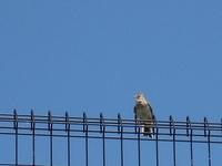 霊苑を訪れる野鳥たち