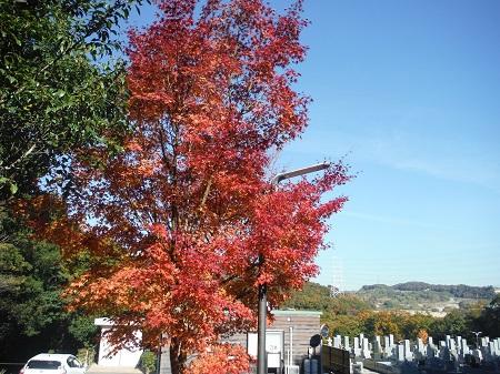 紅葉が色づきました。