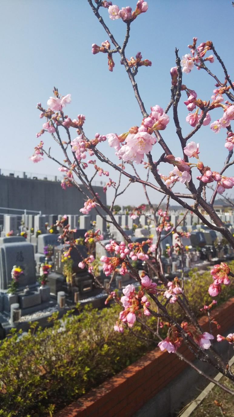 開花情報 3月25日