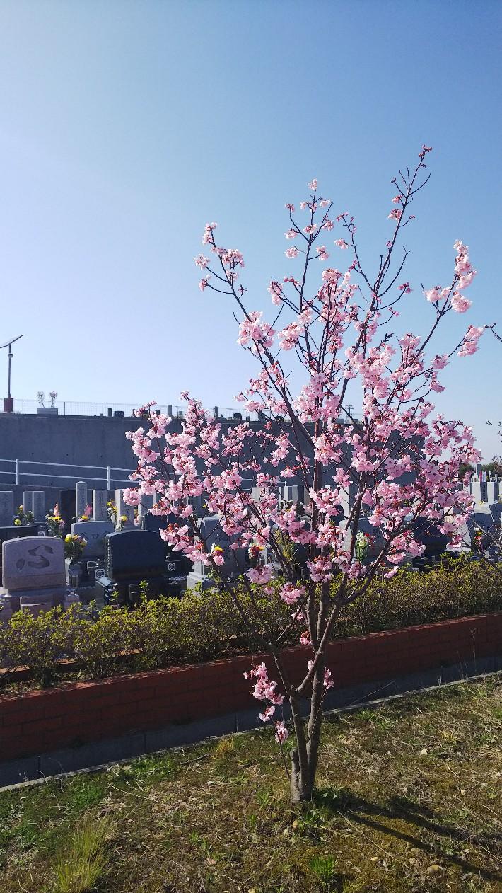 開花情報 3月28日